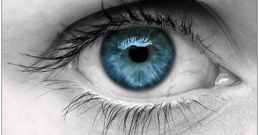 5 alimentos para fortalecer la vista