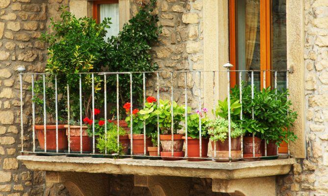 4 ideas para decorar balcones y terrazas users life for Plantas para balcones
