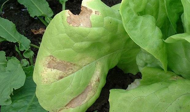 Plantas de jard n 7 sugerencias para controlar las plagas for Plantas de interior hojas rojas
