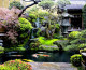 Bonsáis: Los más sorprendentes árboles milenarios para decorar nuestro hogar