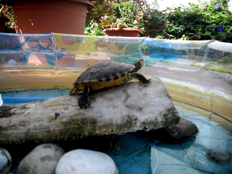 Estanques para tortugas de agua latest las tortugas for Estanques tortugas prefabricados