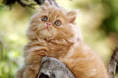 Los gatos: mascotas con energía sanadora