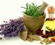 Cómo cultivar plantas medicinales