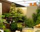 Cómo armar un lindo jardín con pocos cuidados