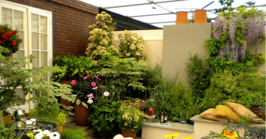 C mo armar un lindo jard n con pocos cuidados users life Como tener un lindo jardin