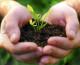 3 consejos para cultivar hierbas aromáticas