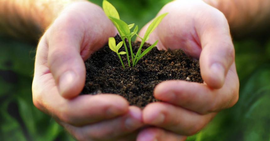 3 consejos para cultivar hierbas arom ticas users life - Plantar plantas aromaticas ...