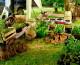 7 recomendaciones para cultivar tu propio alimento orgánico
