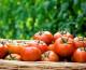 Sistema de cultivo hidropónico para que obtengas tus propios vegetales