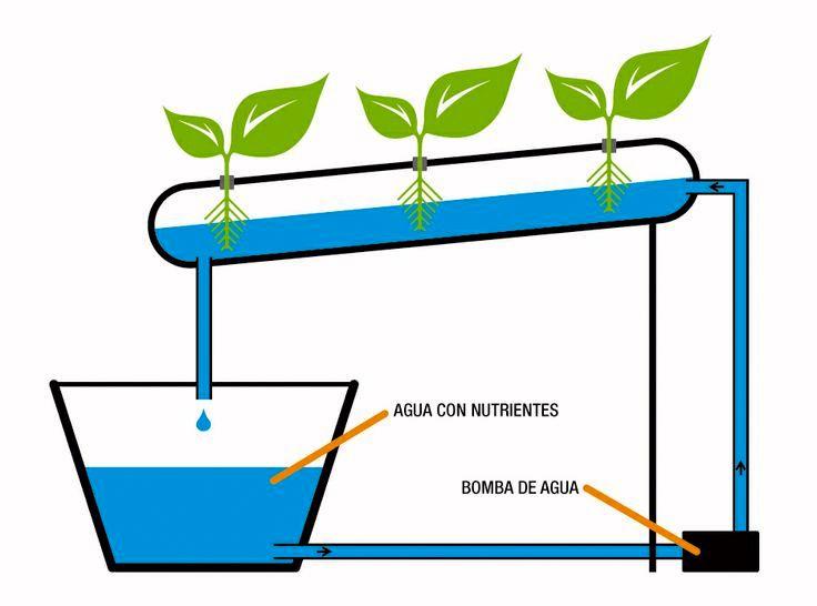 Sistema de cultivo hidrop nico para que obtengas tus - Jardin hidroponico ...