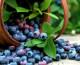 Ideas prácticas para que cultives arándanos