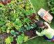 ¿Querés saber en qué consiste un cultivo orgánico?