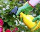 5 elementos para hacer tus propios fertilizantes