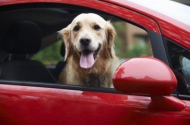 ¿Tu mascota se marea al pasear en coche?