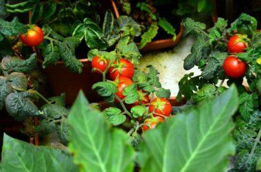 ¿Querés aprender a hacer tus propios vegetales?