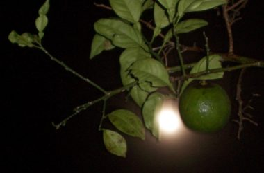 Aprendé a cultivar siguiendo las fases lunares