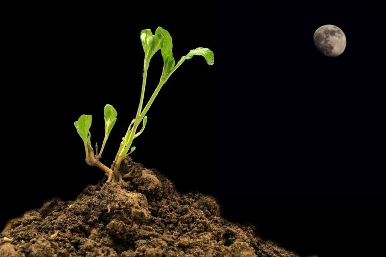 huerta-cultivo-faseslunares1