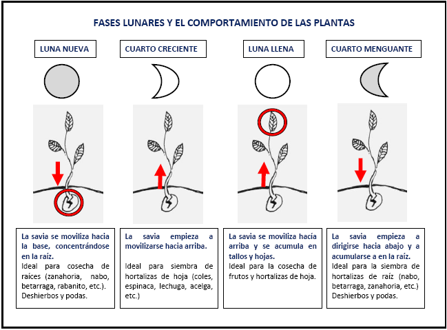 huerta-cultivo-faseslunares2