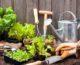 3 consejos para desarrollar un suelo saludable