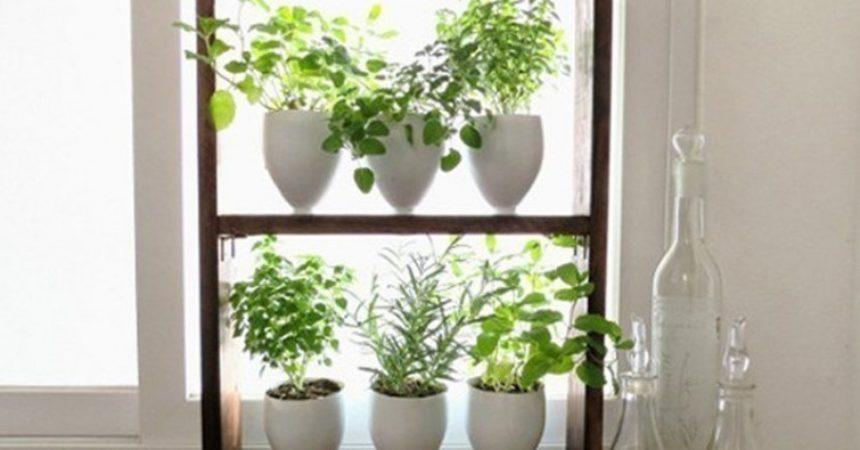 Ideas para hacer un jardín aromático vertical