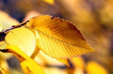 6 consejos para que tus plantas no se vuelvan amarillas